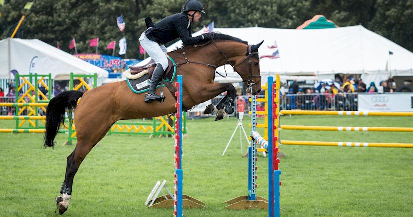 Pferd und Reiter am Hindernis als Symboldbild: AEVO-OnlineKurs hilft auch, wenn man die AEVO-Prüfung zunächst nicht geschafft hatte.
